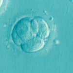How to IVF: Embryo Development for Beginners